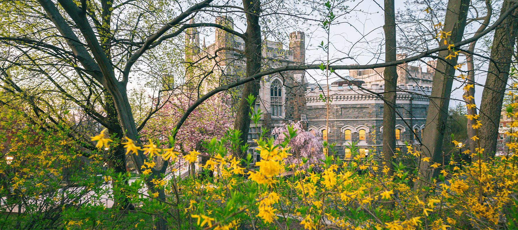 Lehigh University with spring blossoms